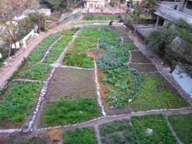 Ambiya Paradise Organic Garden